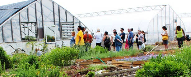 Visiting the greenhouses that provides fresh food for the Ministry Center | Photo by Cecily Fultz